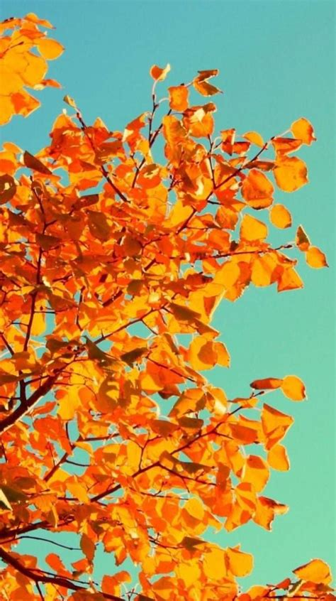 Fall Themed Wallpaper Iphone by Get In The Mood For Fall With Some New Phone Wallpaper