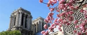 Les Fleurs Paris : o trouver des fleurs pour la saint valentin paris ~ Voncanada.com Idées de Décoration