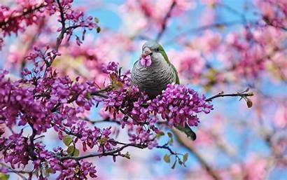 Spring Screensavers Bird