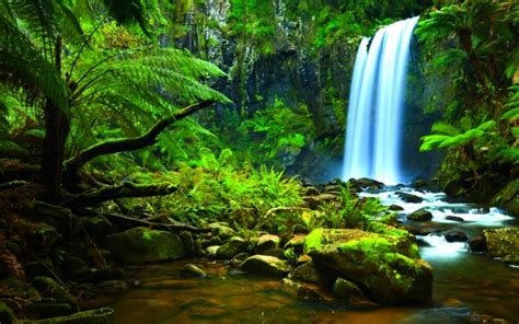Rainforest Waterfall Hd Desktop Wallpapers 4k Hd