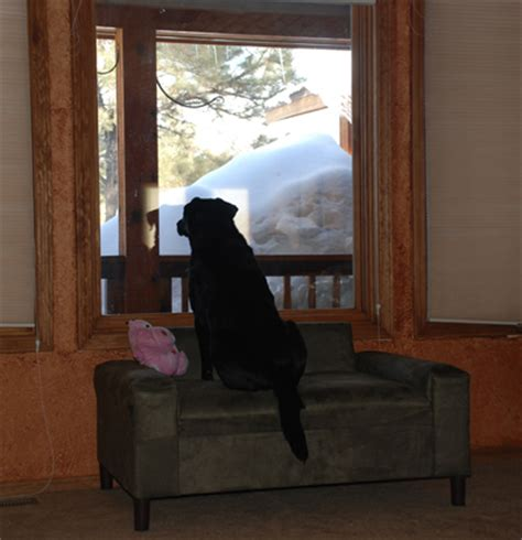 Bolster Cushions For Sofas by Big Dogs Beds Pet Window Seats