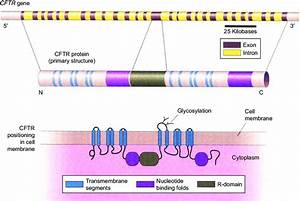 Structure Of The Cystic Fibrosis Transmembrane Conductance
