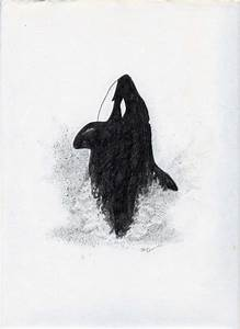 Pencil Drawing: Killer Whale | Collidescopes