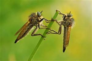 Was Essen Mücken : was hilft gegen m cken im garten ~ Frokenaadalensverden.com Haus und Dekorationen