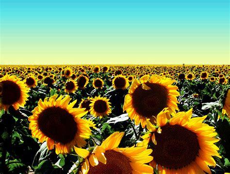 happy sunshine   clip art  clip art  clipart library