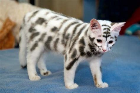 This Rare Mutation Called The Moscow Cool