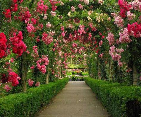 beautiful roses garden beautiful rose garden opegreat