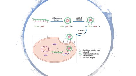 marine drugs  full text folate receptor targeted
