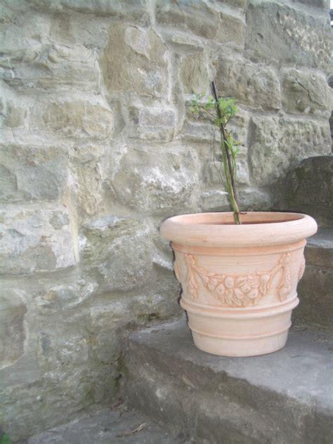 mirtillo in vaso piccoli frutti coltivare il mirtillo in vaso
