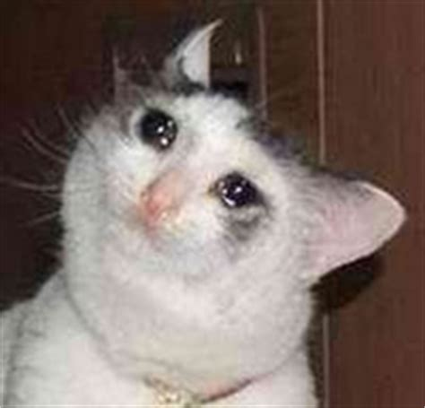 Crying Cat Meme - error vk