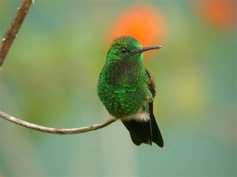 unique animals blogs hummingbirds pictures hummingbirds