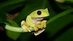 Nature  U0026quot Fabulous Frogs U0026quot