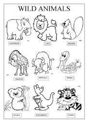 english worksheet wild animals animals wild animal