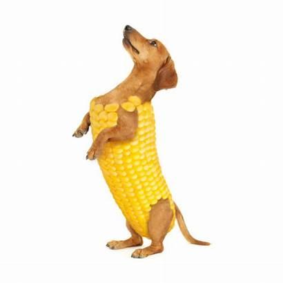 Corn Hybrids Reblog Notes Denny