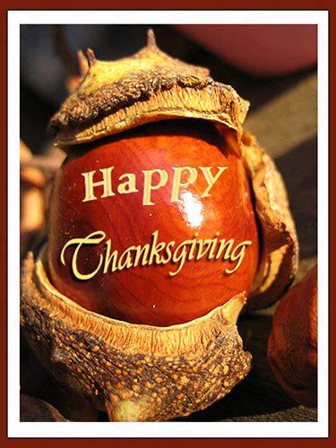 happy thanksgiving   horse chestnut  happy