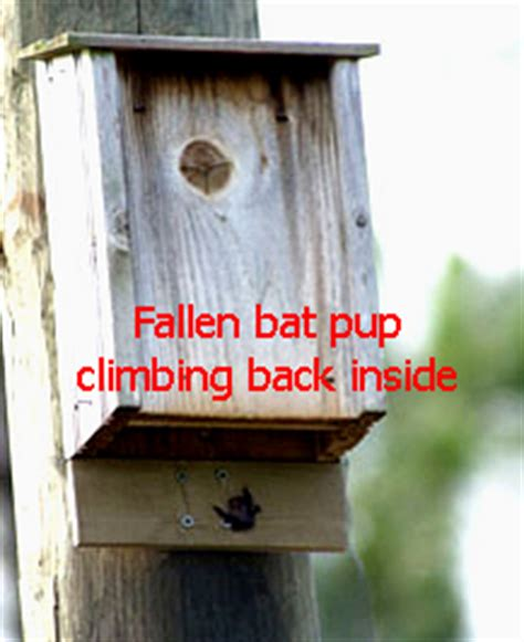 bat house pup catcher