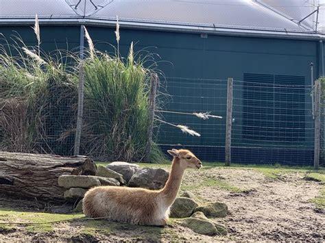 rotterdam zoo tripadvisor holland