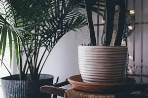 Pflanzen Wenig Licht : zimmerpflanzen bei wenig licht diese 5 wachsen im ~ Lizthompson.info Haus und Dekorationen