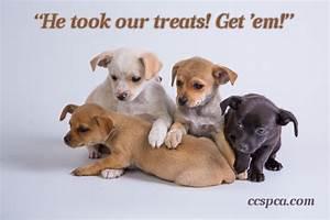 """Cute Puppy Caption - """"He took our treats! Get 'em ..."""