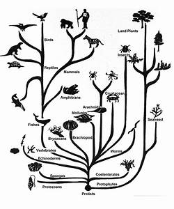 What Is The Evolutionary Relationship Between A B