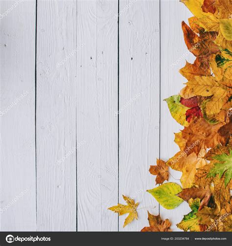 colorful autumn dry leaves border frame white painted