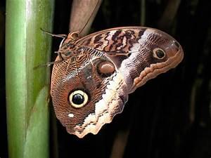 Galería de imágenes: Mariposas b