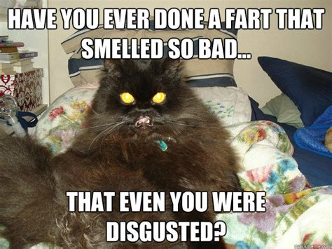 Cat Fart Meme - have you ever done a fart that smelld so bad that even you were disgusted eww cat quickmeme