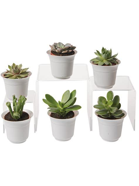 small terrarium plants succulent terrarium plant collection small terrarium plants for sale