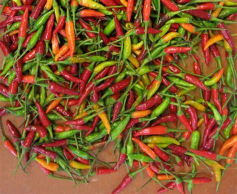 thai chilies fresh thai chile peppers importfood