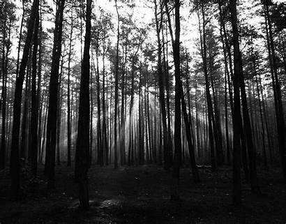 Forest Dark Background Wallpapers Desktop Backgrounds Nature