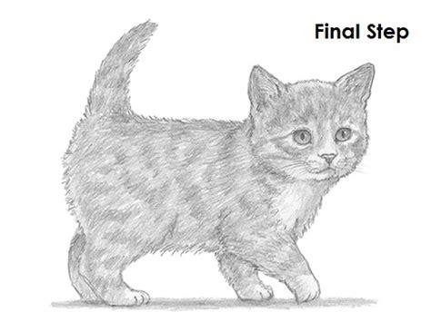 draw  kitten