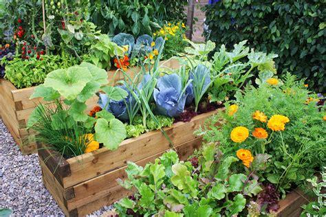 tips  starting  home vegetable garden eco talk