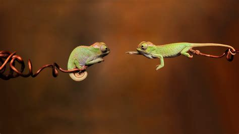 adorable   prove chameleons