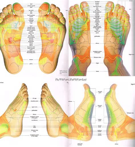foot reflexology chart foot reflexology  based   principle    reflexes