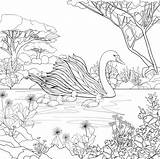 Coloring Swan Adult Bird Swans Animal Printable Colouring Sheets Seuss Dr Embroidery Colour Sea Saying Princess Cat Visit Coloringbay Therapy sketch template