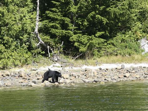 Boat Insurance Vancouver Island by Ucluelet Cruise Tour Trailfinders