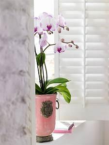 Zimmerpflanzen Für Dunkle Ecken : pflanzen f r dunkle ecken zuhause wohnen ~ Michelbontemps.com Haus und Dekorationen