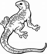 Coloring Lizard Pages Printable sketch template