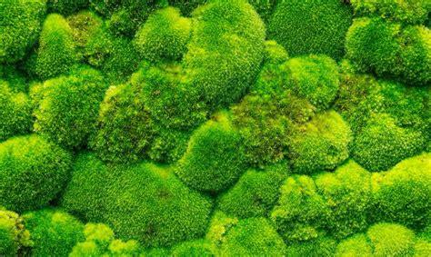 indoor vertical garden the trend in green houses moss walls