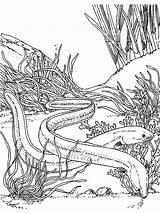 Eel Electric Coloring Pages Colouring Eels Getdrawings Getcolorings sketch template