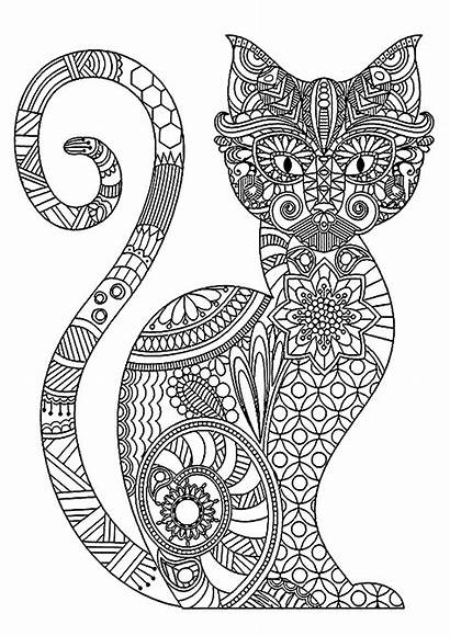 Coloring Cat Pages Adults