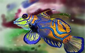 10 Of The Most Colorful Animals In Existence - Page 2 of 5