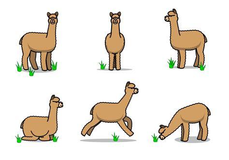 alpaca vector   vector art stock