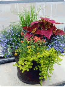 Container Pots Flowers Ideas