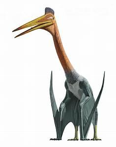 Quetzalcoatlus vs Hatzegopteryx - Dinosaurs Forum  Quetzalcoatlus
