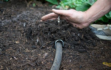 drip irrigation mulch how to use soaker hoses to install a drip irrigation system in your garden rodale s organic life