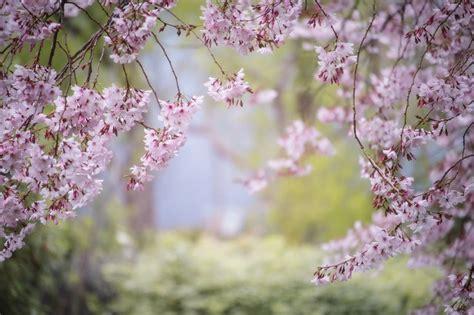 pink spring nature  photo  pixabay