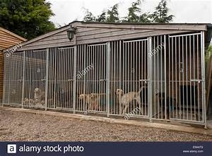 Working gun dog kennels yellow labrador with puppies for Yellow dog kennel