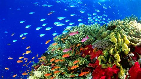 Animated Reef Wallpaper - coral reef live wallpaper 59 images