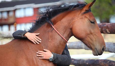 natural horsemanship horses